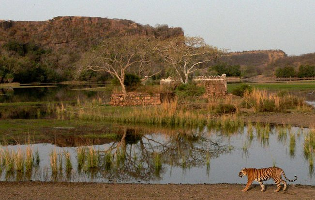 Ranthambhore%20Tiger%20park India