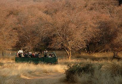 Ranthambore-National-Park-safari India tiger park
