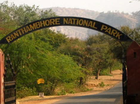 ranthambore_national_park_India