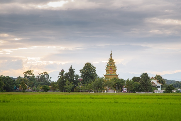 Chiang Rai beautiful rice fields and temples